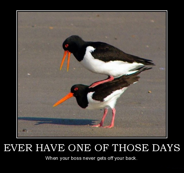 ever-have-one-of-those-days-birds-jobs-life-demotivational-poster ...